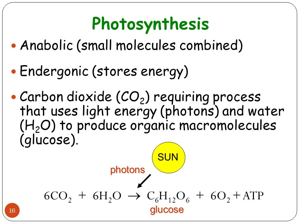 Photosynthesis Anabolic (small molecules combined)