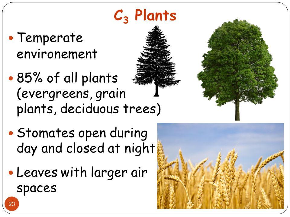 C3 Plants Temperate environement