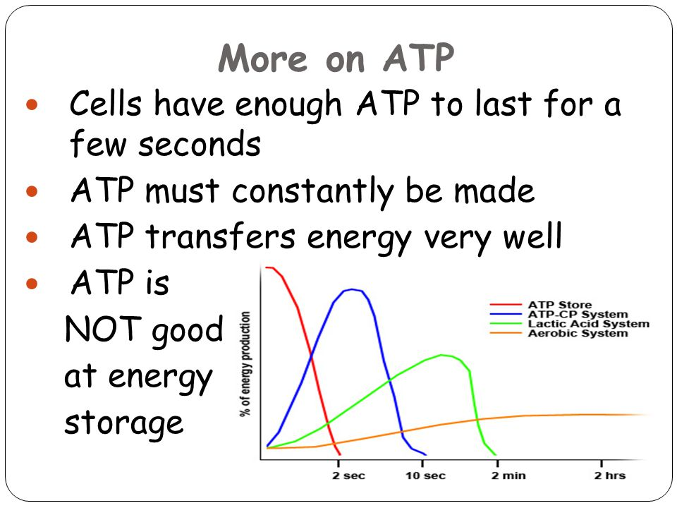 More on ATP Cells have enough ATP to last for a few seconds