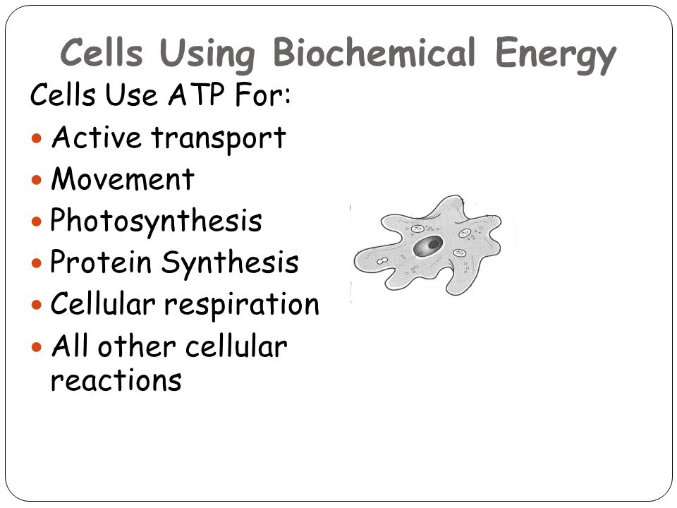 Cells Using Biochemical Energy