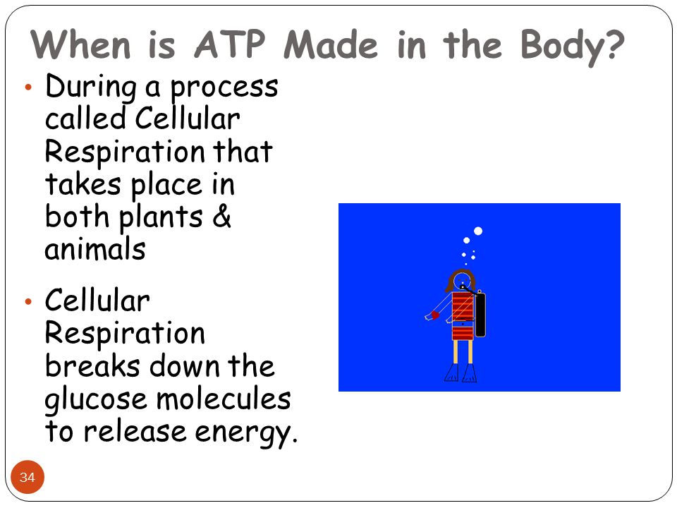 When is ATP Made in the Body