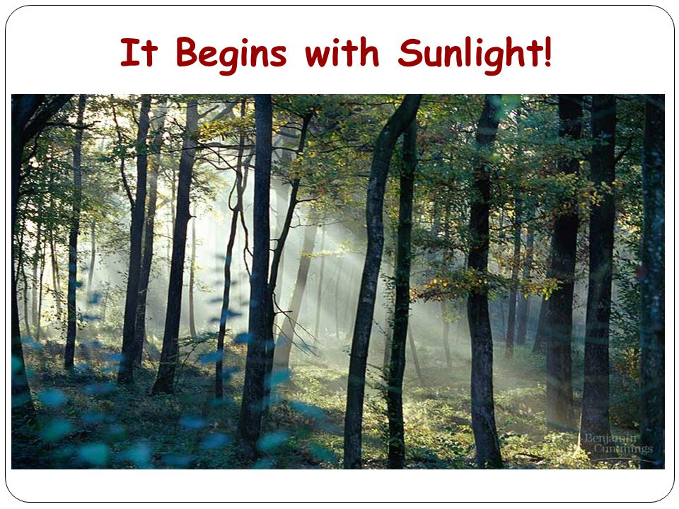 It Begins with Sunlight!