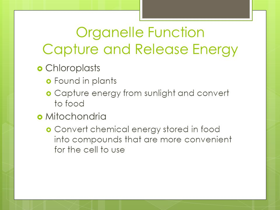 Organelle Function Capture and Release Energy