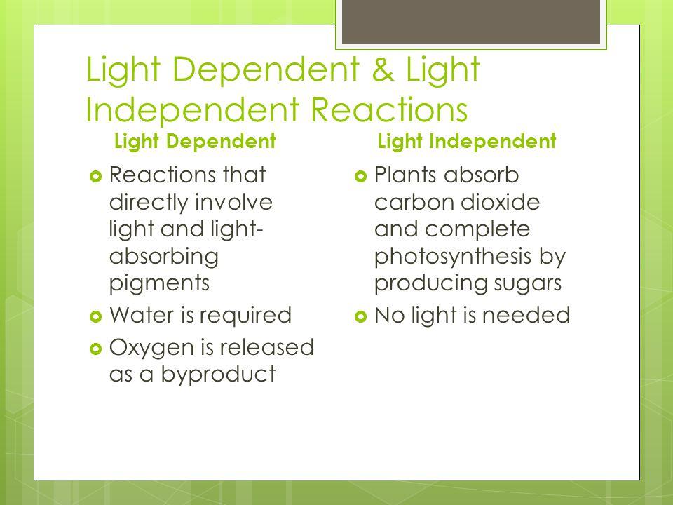 Light Dependent & Light Independent Reactions