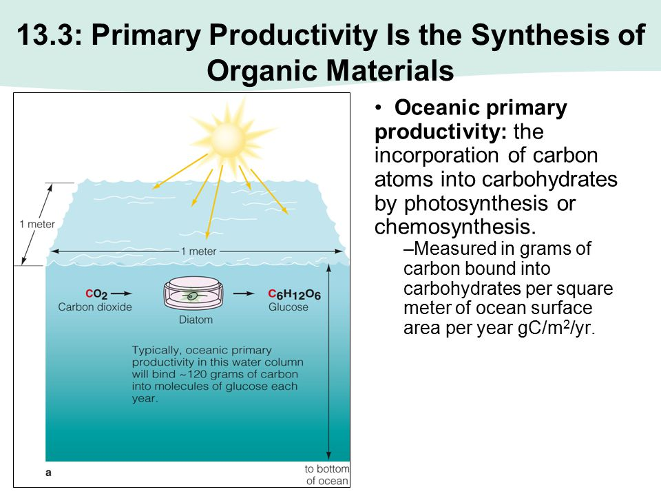13.3: Primary Productivity Is the Synthesis of Organic Materials