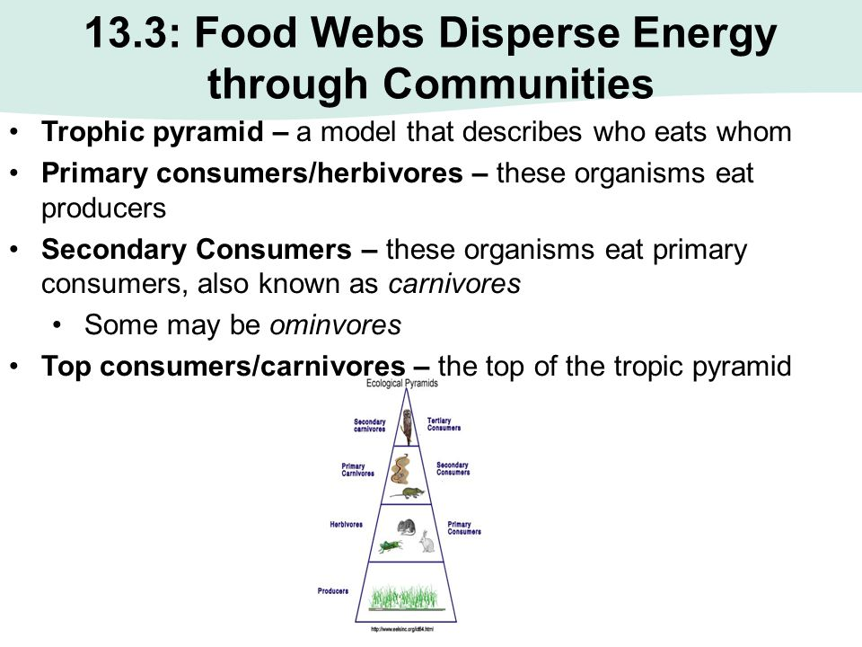 13.3: Food Webs Disperse Energy through Communities