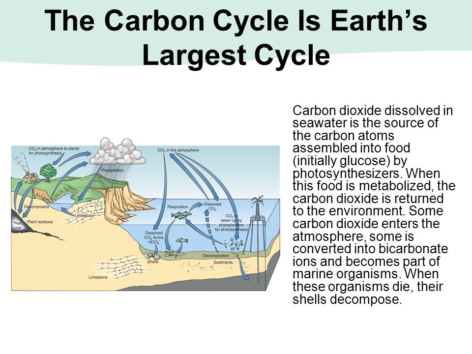 The Carbon Cycle Is Earth's Largest Cycle