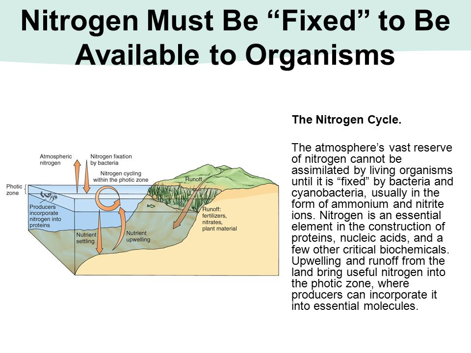 Nitrogen Must Be Fixed to Be Available to Organisms