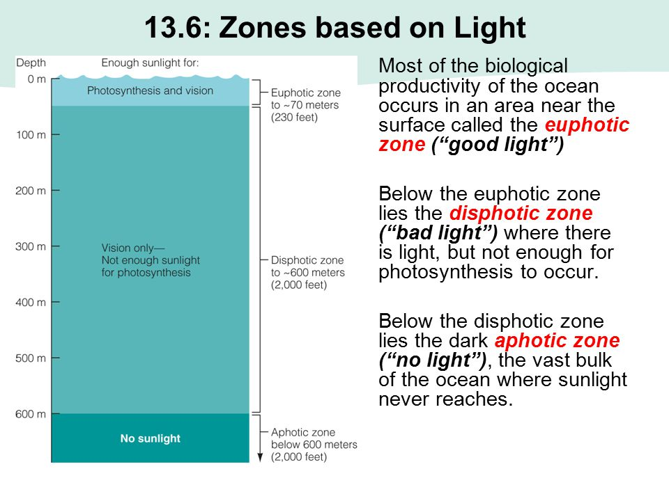 13.6: Zones based on Light