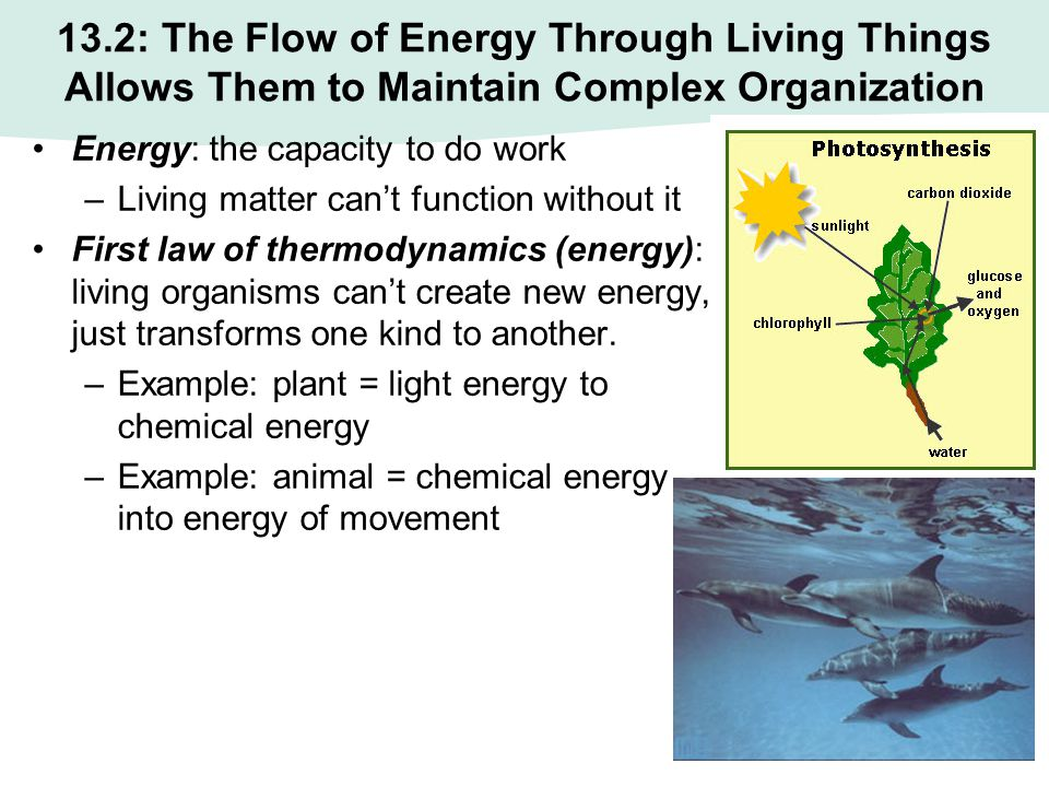 13.2: The Flow of Energy Through Living Things Allows Them to Maintain Complex Organization