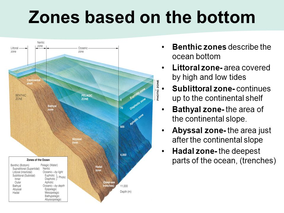 Zones based on the bottom