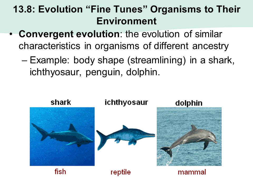 13.8: Evolution Fine Tunes Organisms to Their Environment