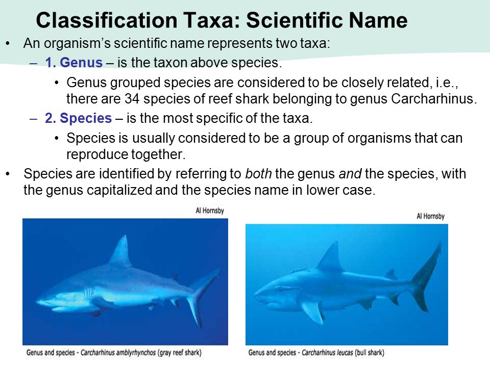 Classification Taxa: Scientific Name