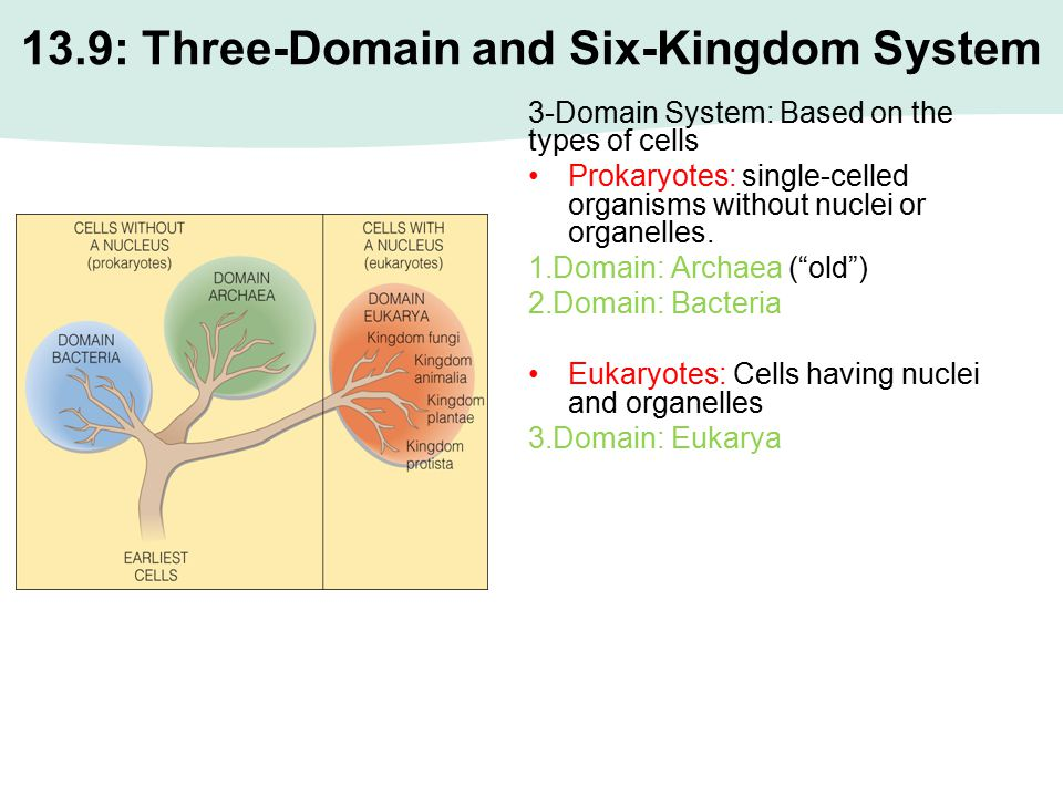 13.9: Three-Domain and Six-Kingdom System