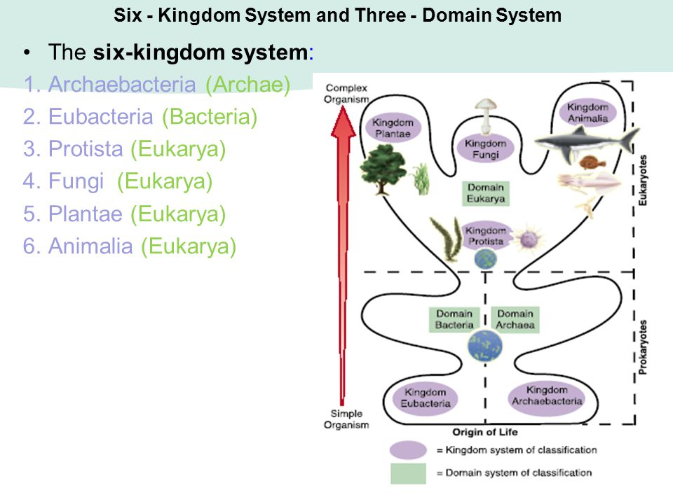 Six - Kingdom System and Three - Domain System