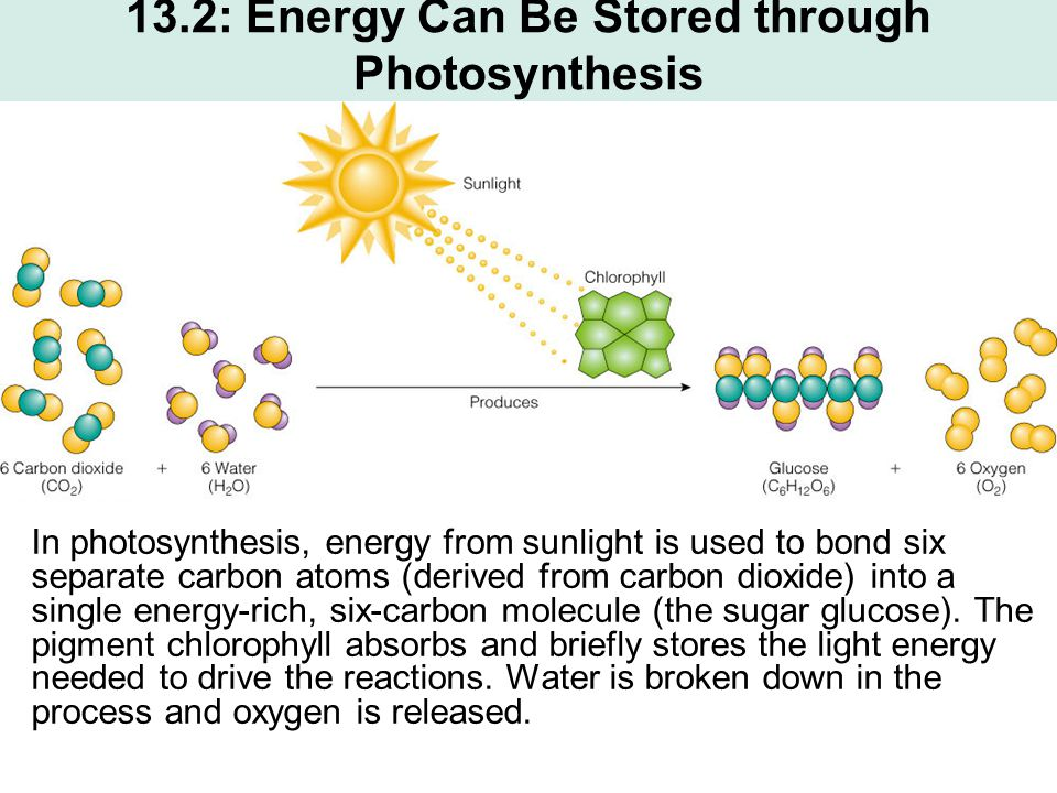 13.2: Energy Can Be Stored through Photosynthesis