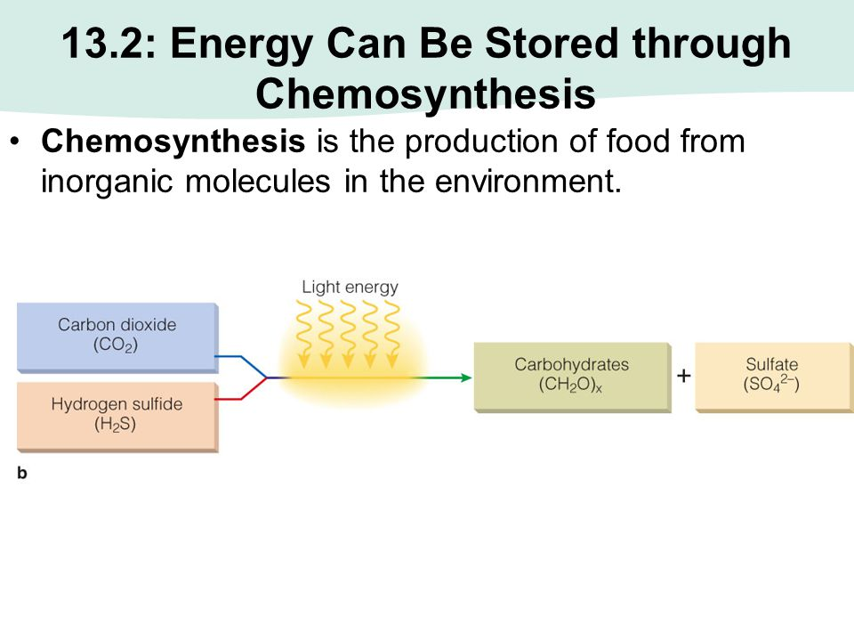 13.2: Energy Can Be Stored through Chemosynthesis