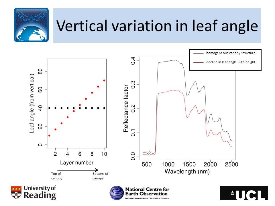 Vertical variation in leaf angle