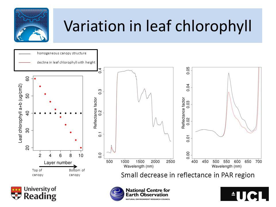 Variation in leaf chlorophyll