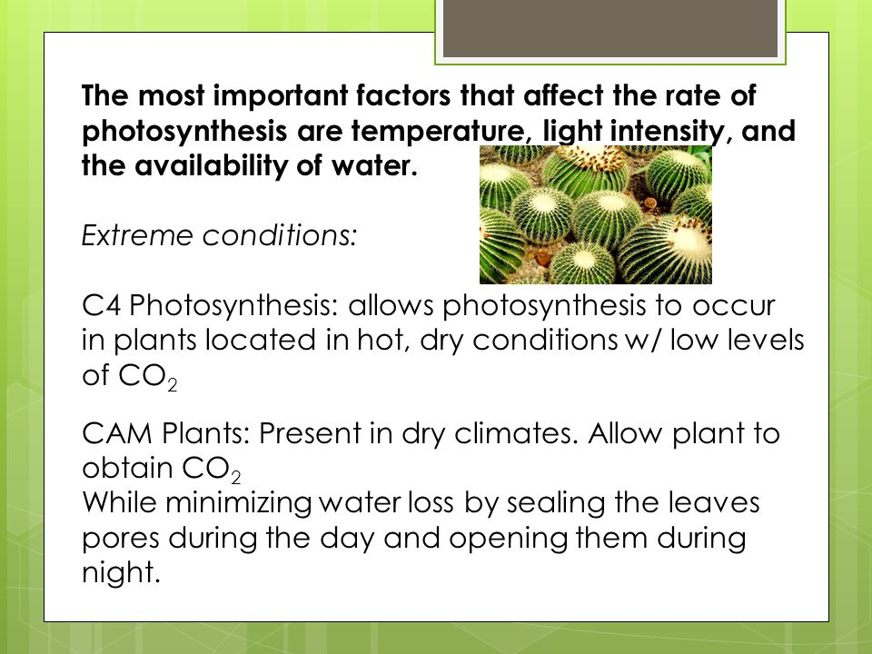 The most important factors that affect the rate of photosynthesis are temperature, light intensity, and the availability of water.