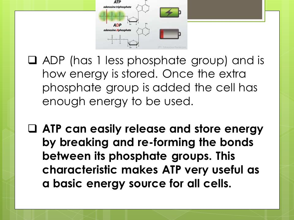 ADP (has 1 less phosphate group) and is how energy is stored