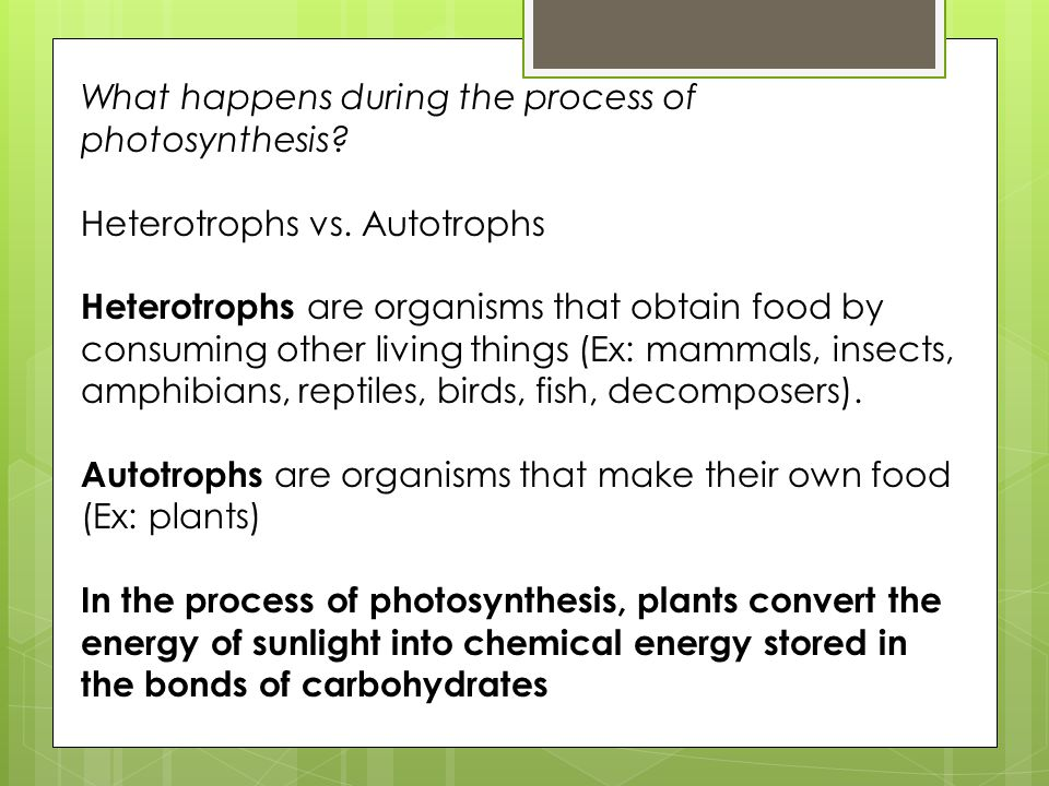 What happens during the process of photosynthesis