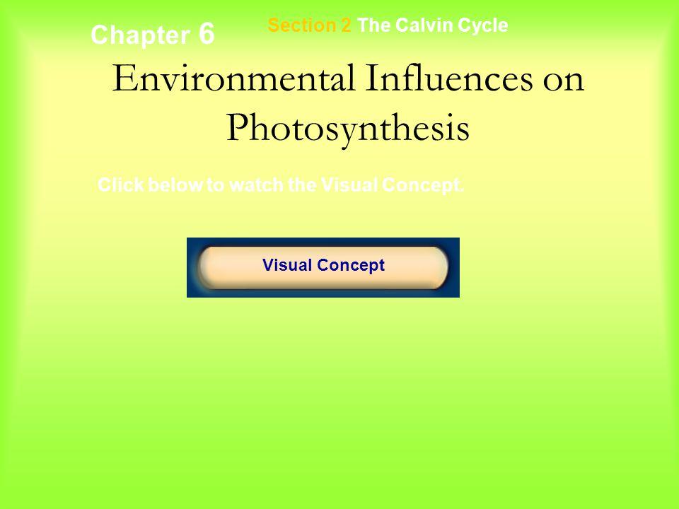 Environmental Influences on Photosynthesis