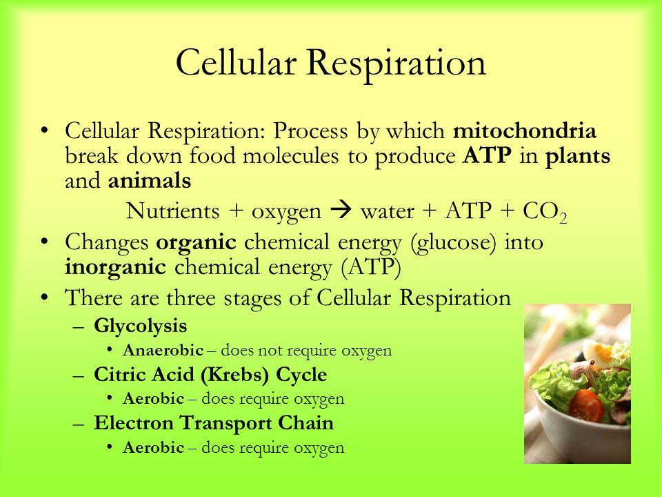 Nutrients + oxygen  water + ATP + CO2