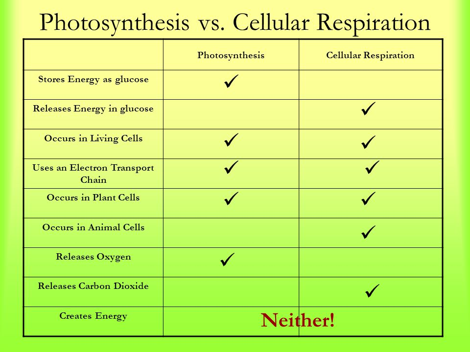 photosynthesis vs cell respiration Photosynthesis and cellular respiration are in their most obvious ways mirrors of each other when the earth had a lot less oxygen in the air, photosynthetic organisms used carbon dioxide and produced oxygen as a byproduct.