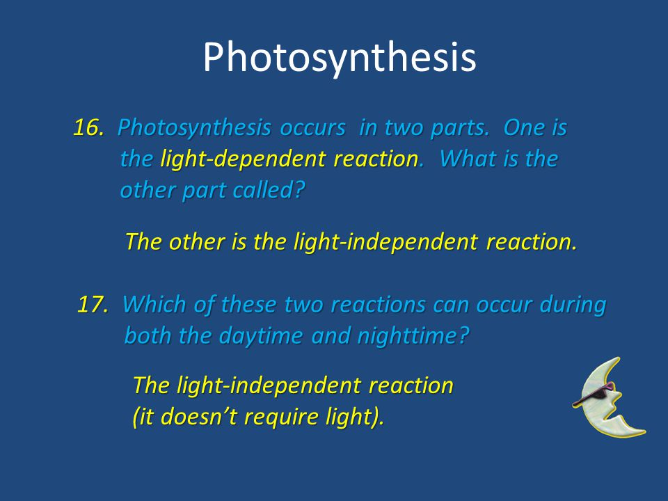 Photosynthesis 16. Photosynthesis occurs in two parts. One is