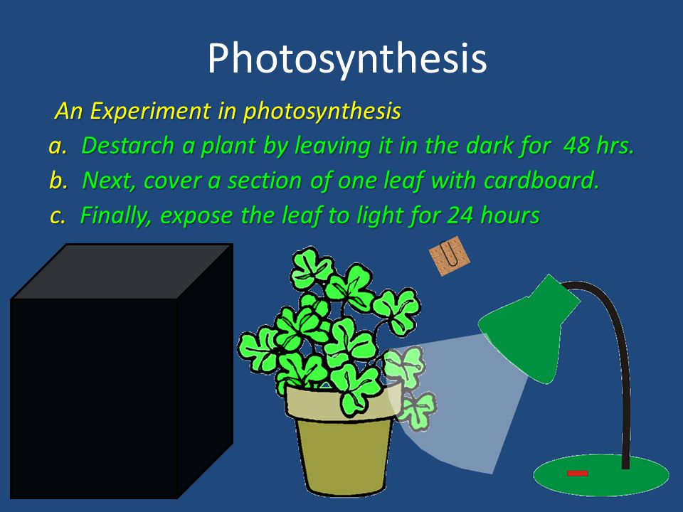 Photosynthesis An Experiment in photosynthesis