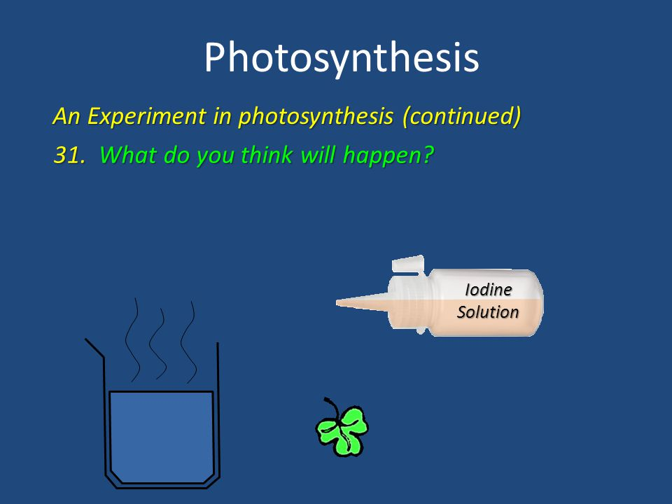 Photosynthesis An Experiment in photosynthesis (continued)
