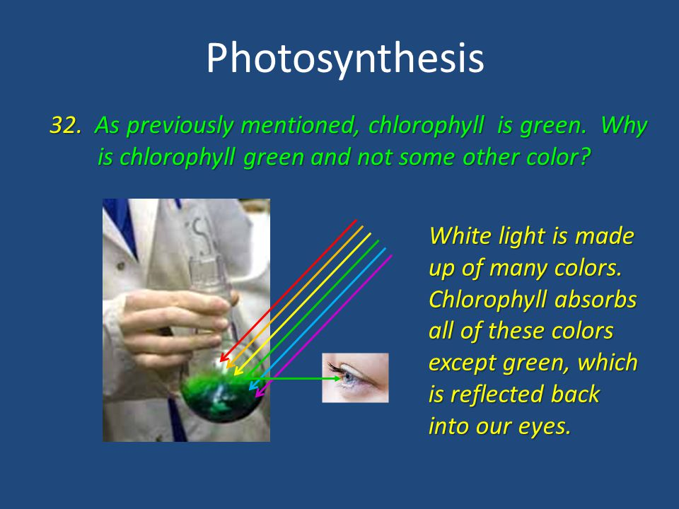 Photosynthesis 32. As previously mentioned, chlorophyll is green. Why