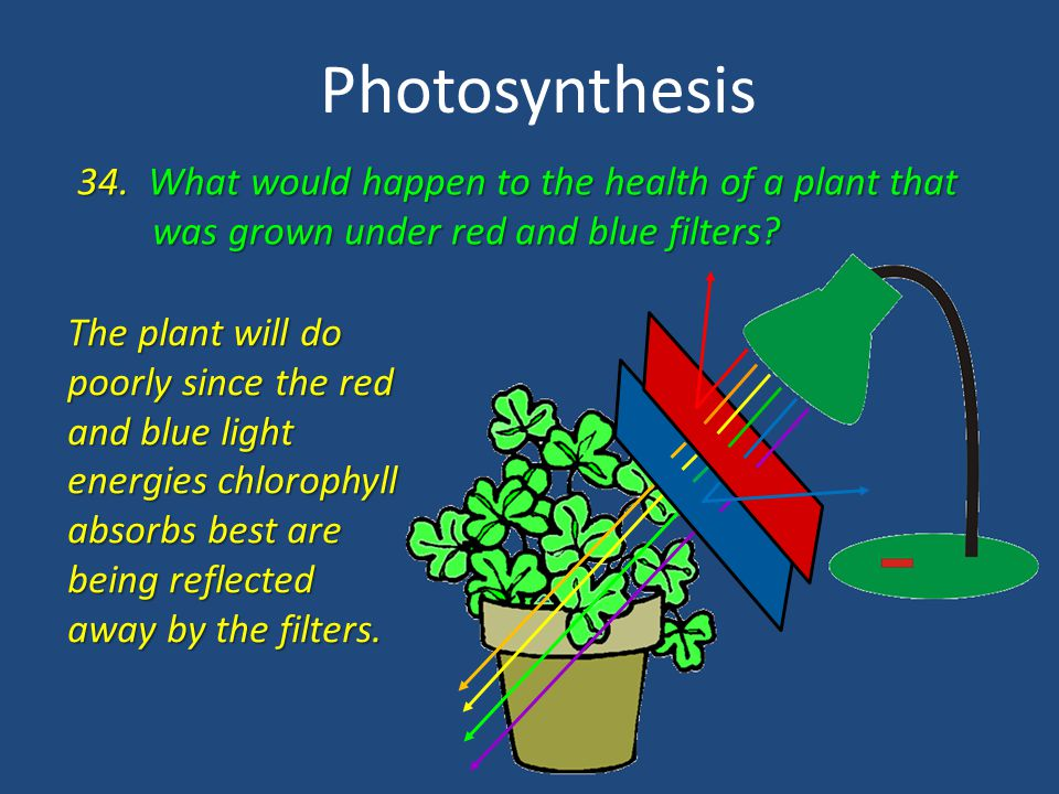 Photosynthesis 34. What would happen to the health of a plant that