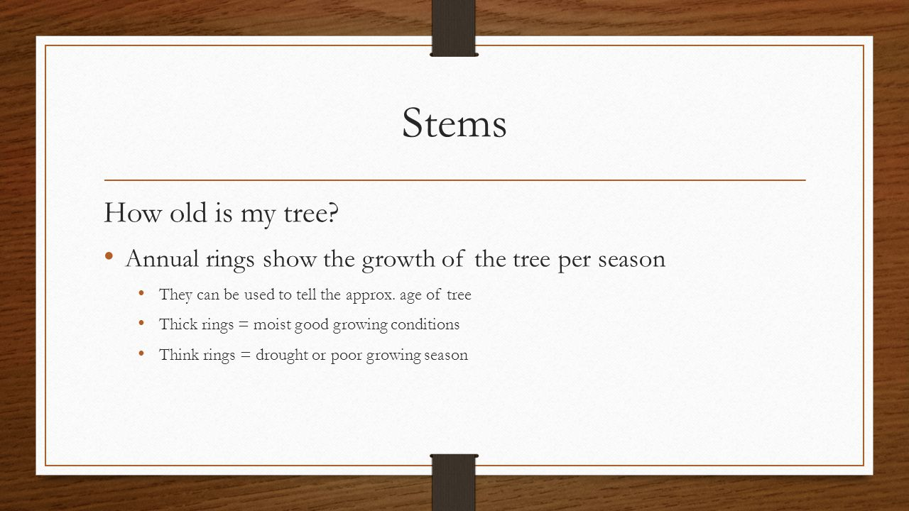 Stems How old is my tree Annual rings show the growth of the tree per season. They can be used to tell the approx. age of tree.