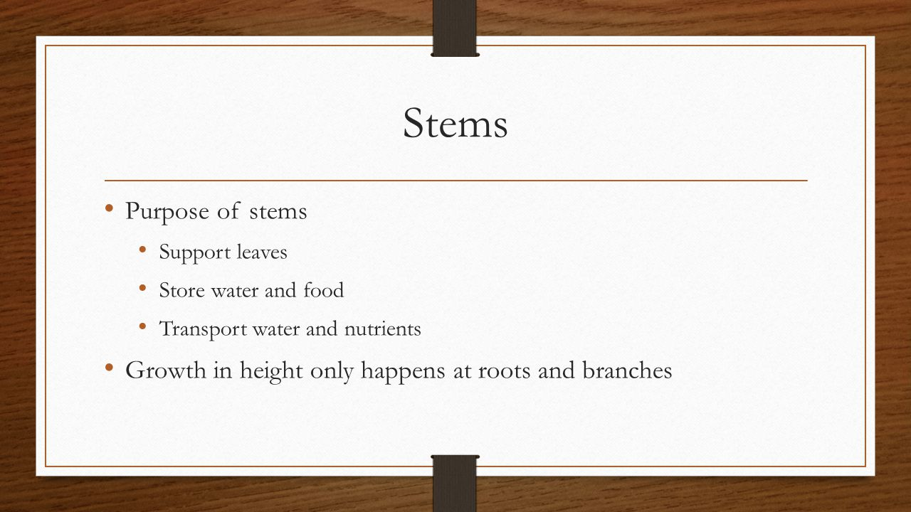 Stems Purpose of stems. Support leaves. Store water and food.
