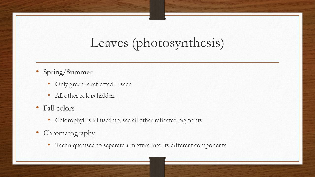 Leaves (photosynthesis)