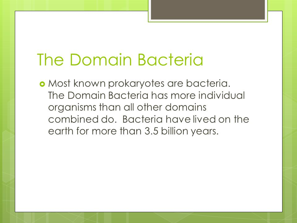 The Domain Bacteria