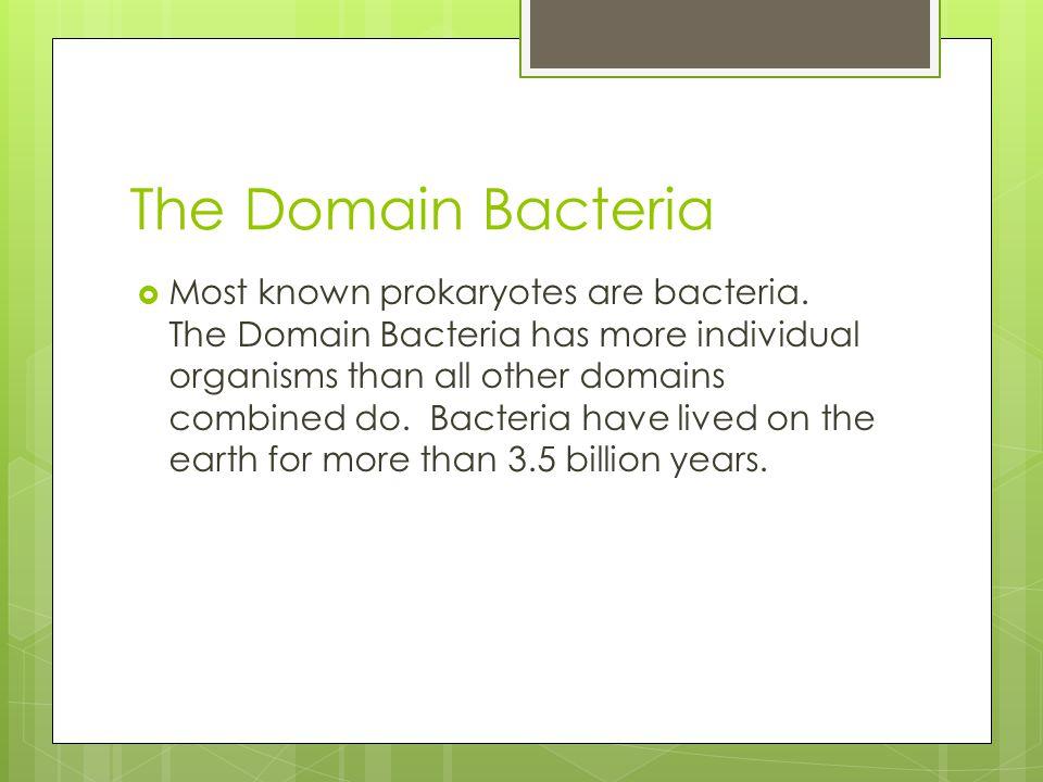 The Domain Bacteria