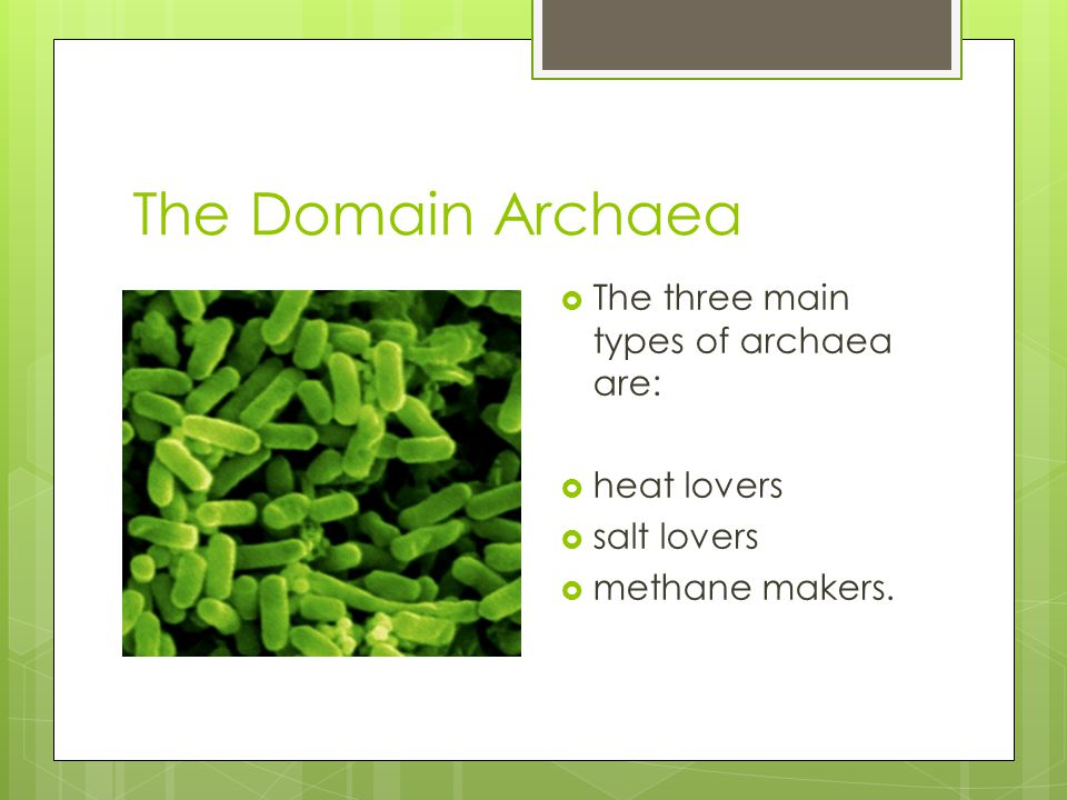 The Domain Archaea The three main types of archaea are: heat lovers