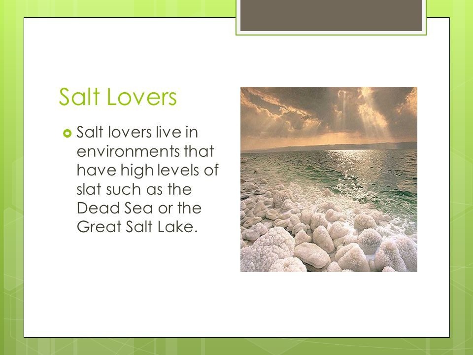 Salt Lovers Salt lovers live in environments that have high levels of slat such as the Dead Sea or the Great Salt Lake.
