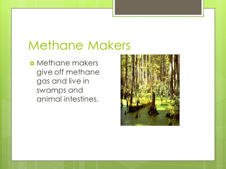 Methane Makers Methane makers give off methane gas and live in swamps and animal intestines.