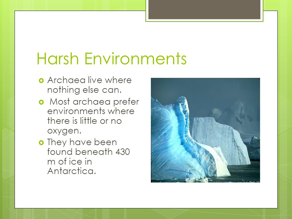 Harsh Environments Archaea live where nothing else can.