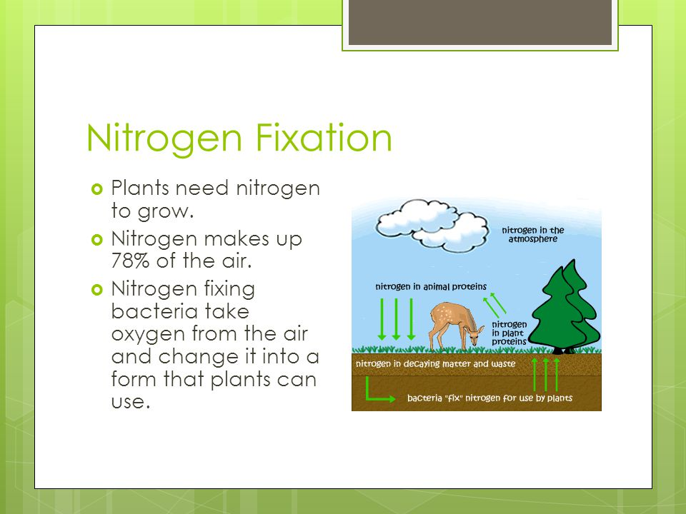 Nitrogen Fixation Plants need nitrogen to grow.