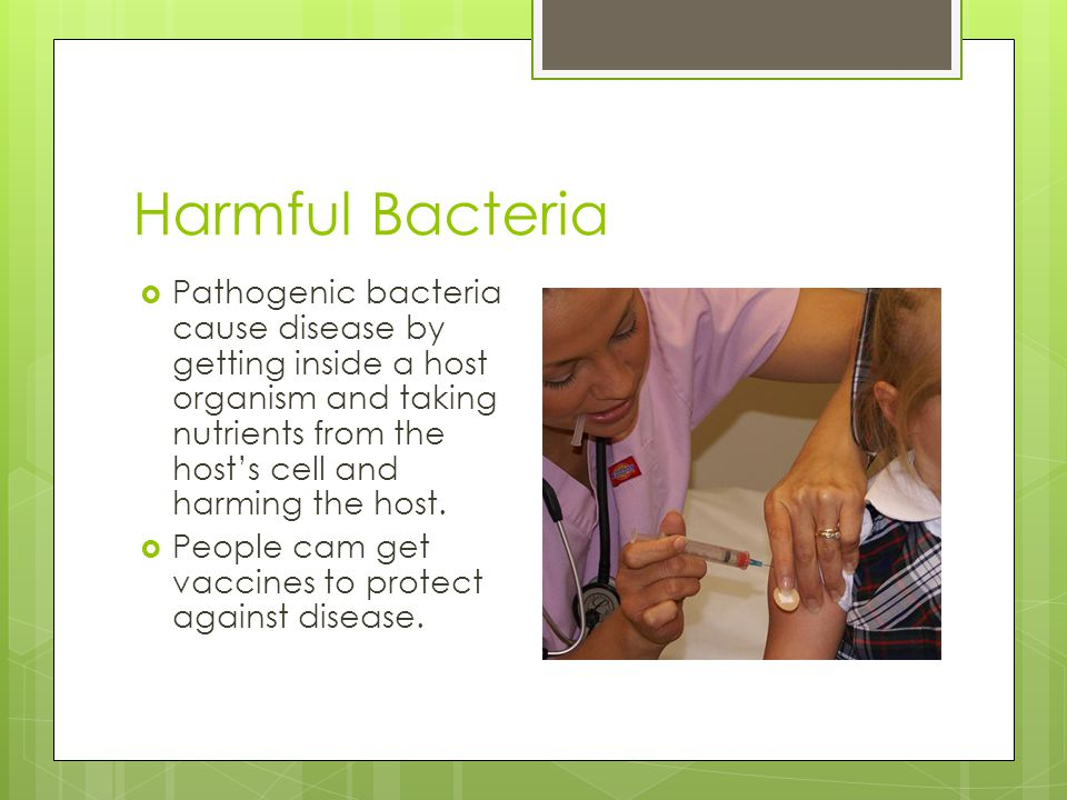 Harmful Bacteria Pathogenic bacteria cause disease by getting inside a host organism and taking nutrients from the host's cell and harming the host.