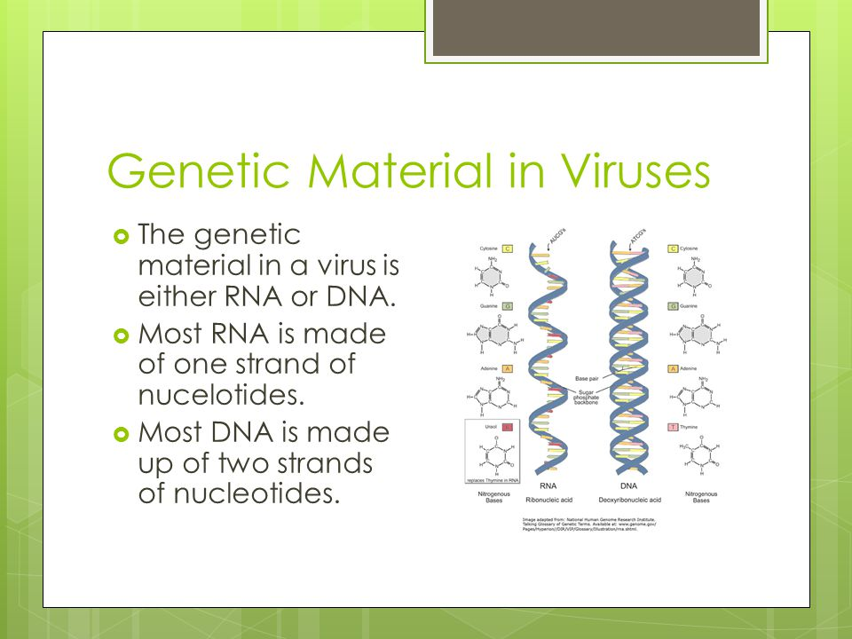 Genetic Material in Viruses