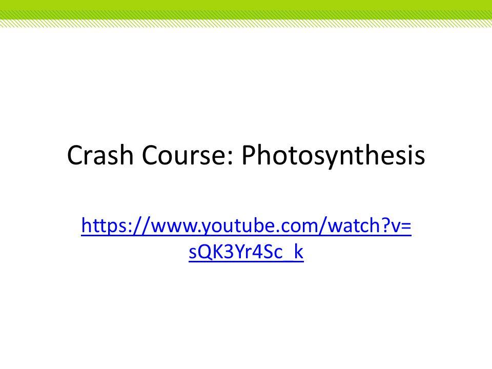 Crash Course: Photosynthesis