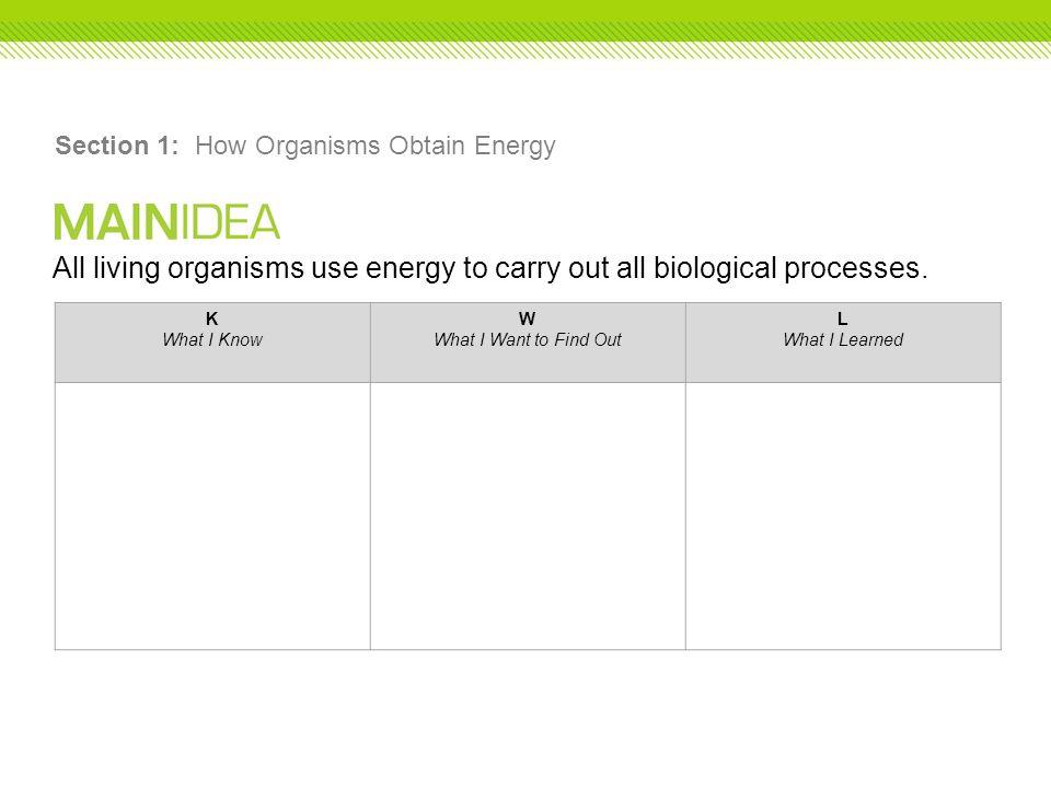 Section 1: How Organisms Obtain Energy