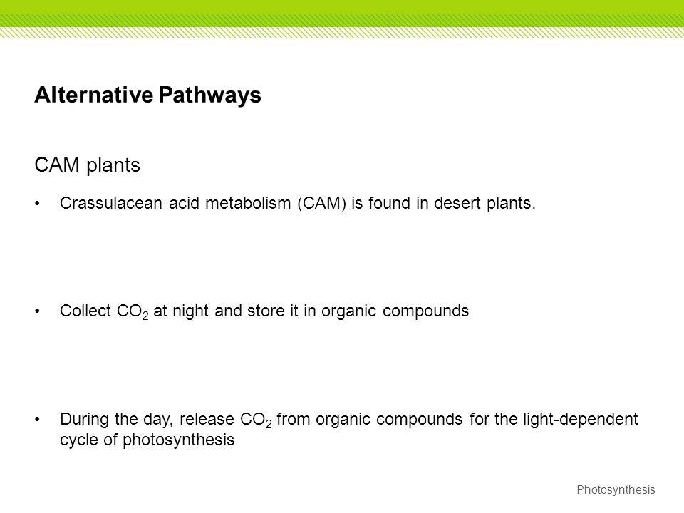 Alternative Pathways CAM plants