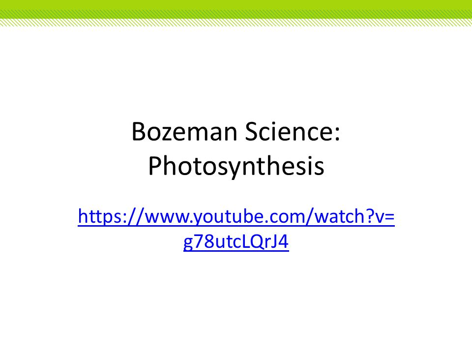 Bozeman Science: Photosynthesis